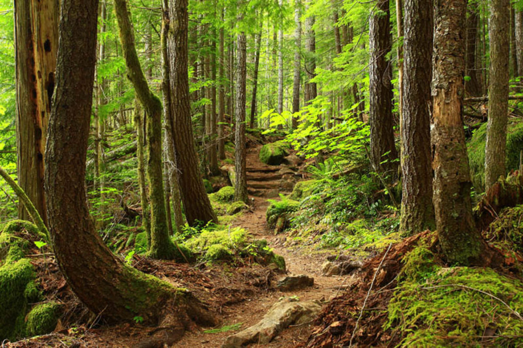 open forest pathway