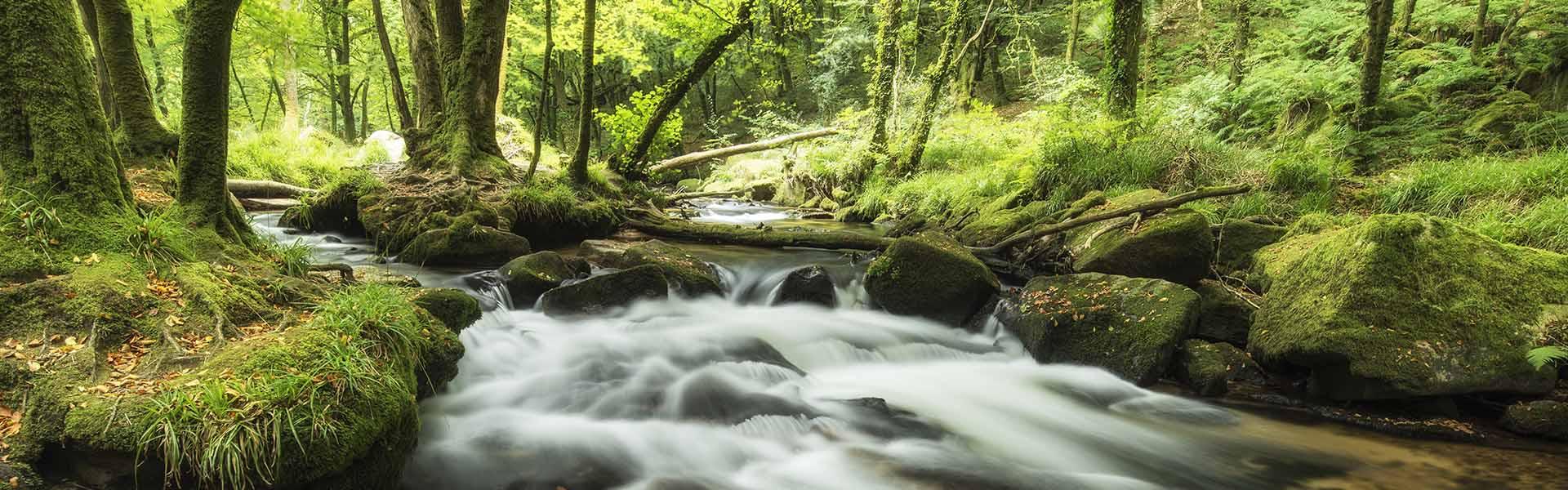 river running through devon forest