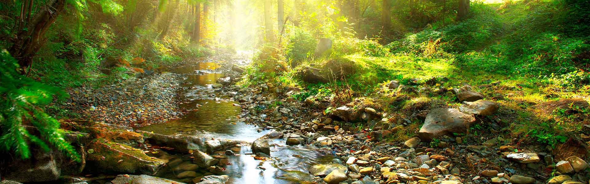 stream in a wood